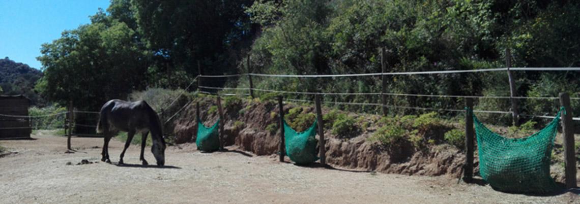 uso de redes slow feeder para caballos