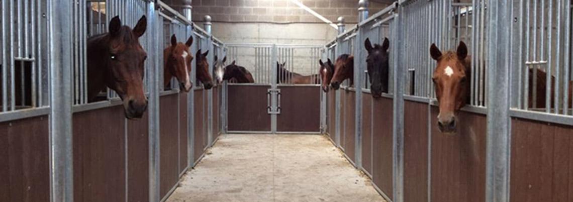 caballos estabulados en cuadras pequeñas