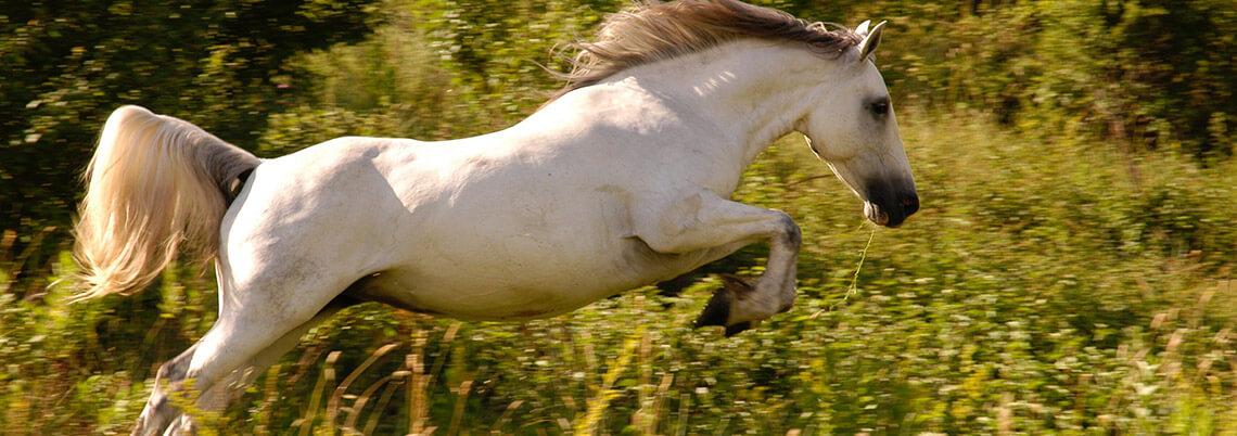 enriquecimiento ambiental equino