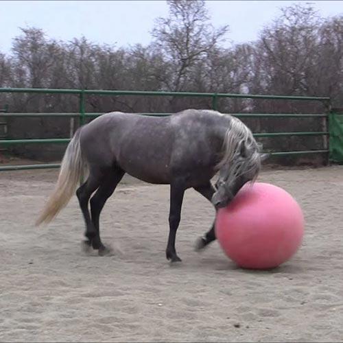 pelota para caballo anti-estrés