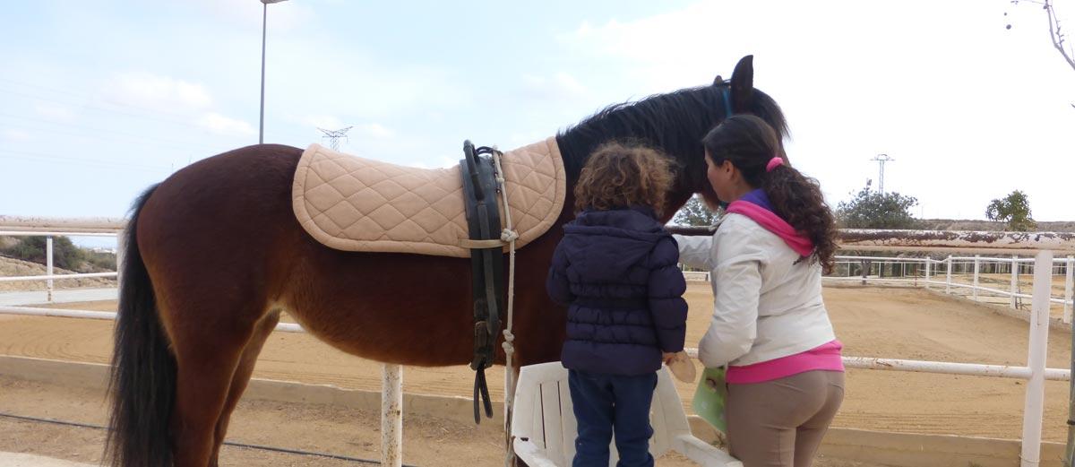 cepillado del caballo