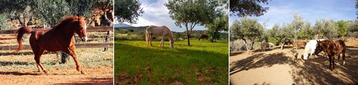 espacio para el caballo