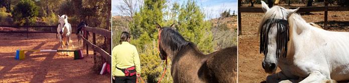 longevidad del caballo