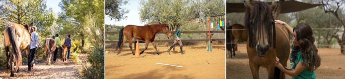 tiempo y dedicación al caballo