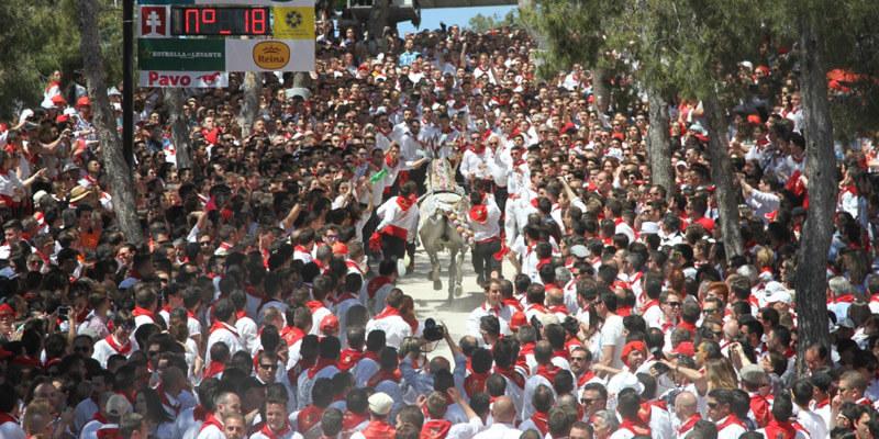 carrera caballo del vino durante la fiesta