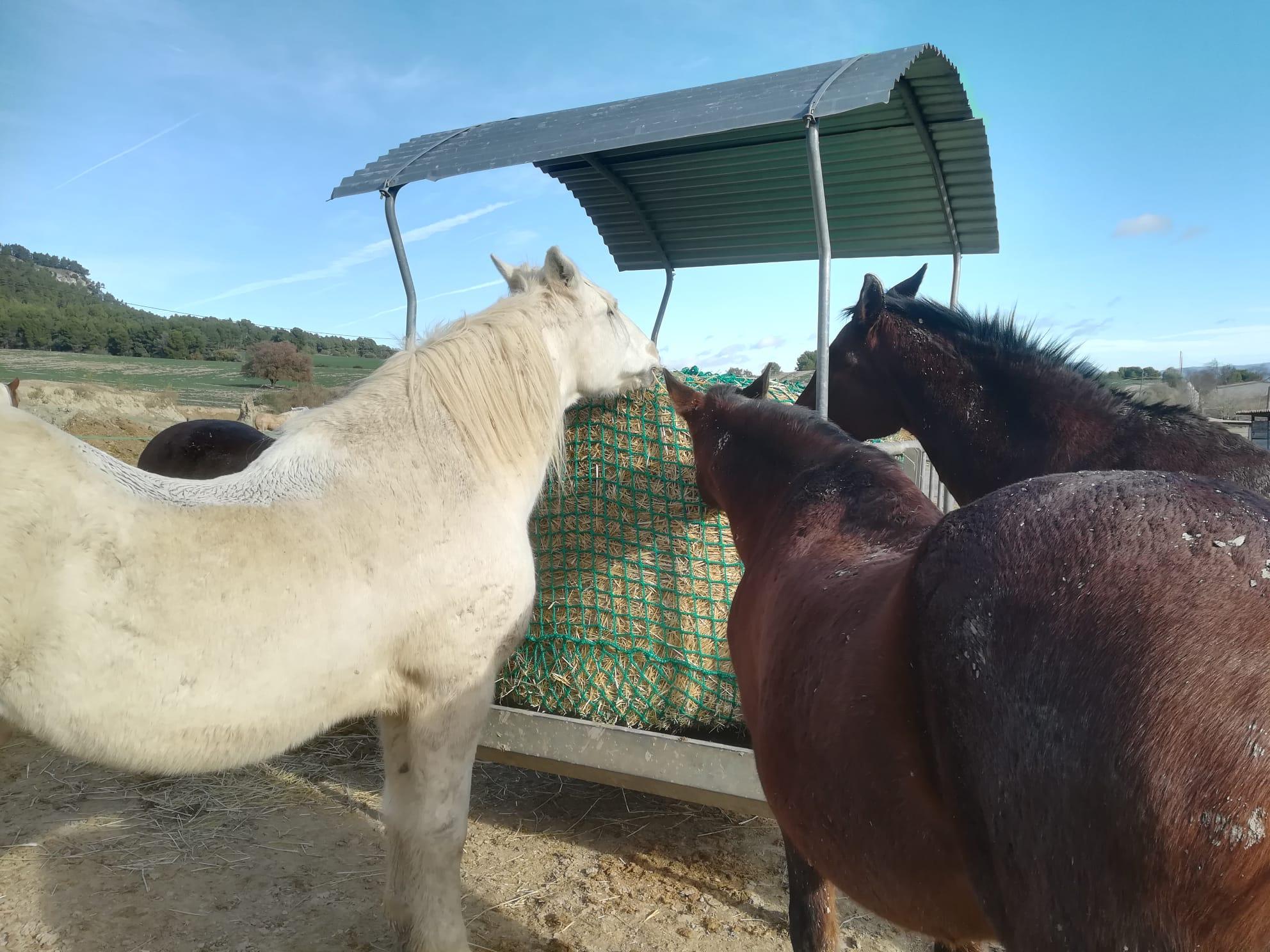 caballos comiendo en nieve gracias a red slow feeder