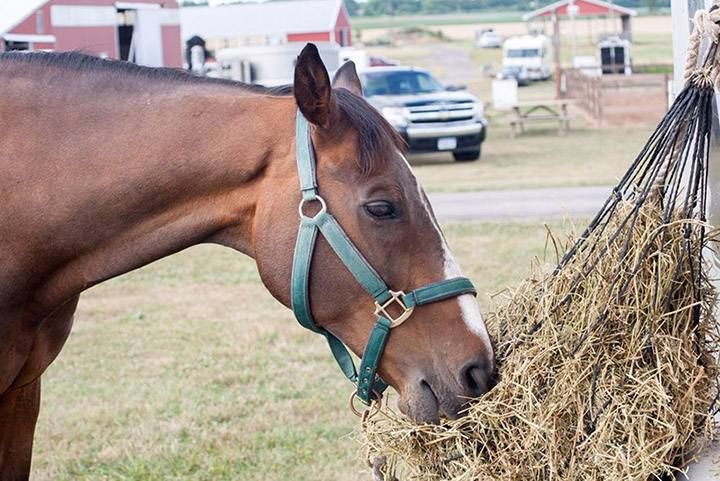 proteinas caballos