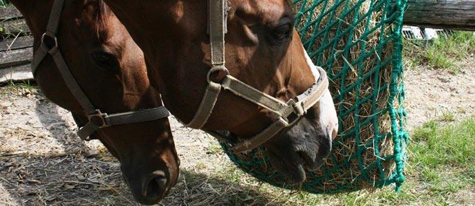 Slow Feeding Equino, una beneficiosa forma de dar de comer al caballo