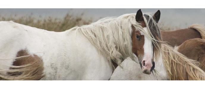 Mi caballo traga aire