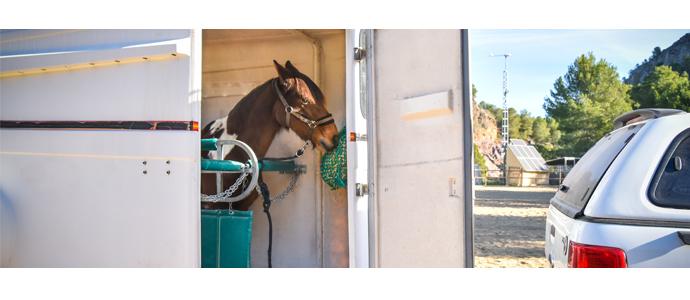 Importancia de la alimentación del caballo cuando viaja