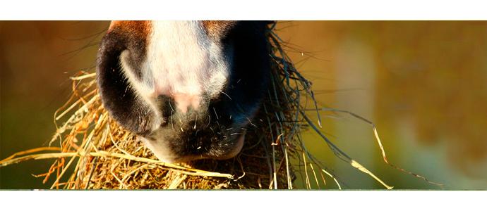 Complementos alimenticios para el caballo