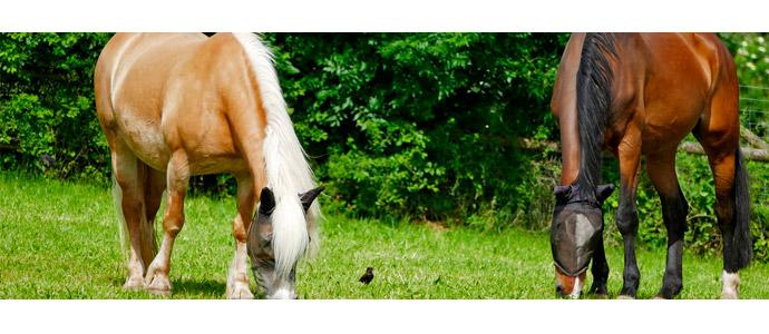 La alimentación del caballo en primavera