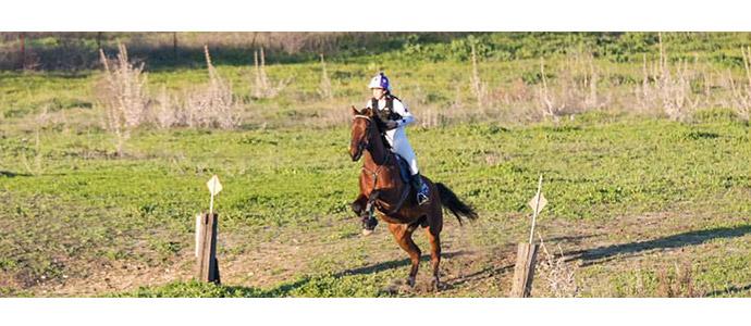 Cuidado para el caballo de competición